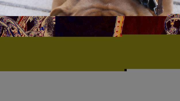 Els gossos pateixen especialment les altes temperatures / Foto: ACN