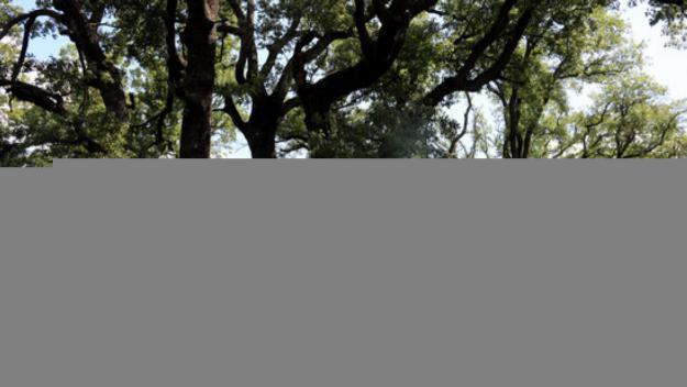 Plantar boscos no aturarà el canvi climàtic / Foto: ACN