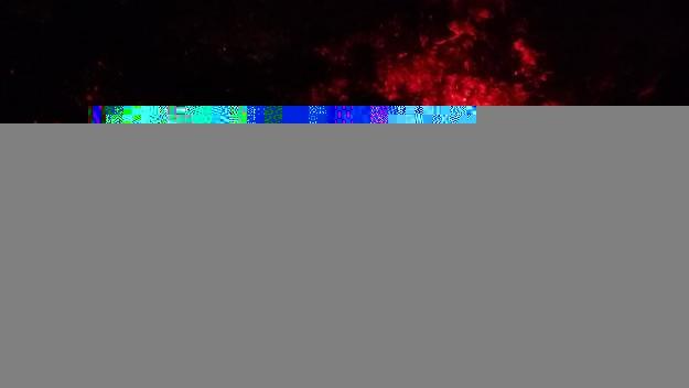 La plaça de la Vila s'ha il·luminat de vermell aquest dissabte per la Distròfia Muscular de Duchenne