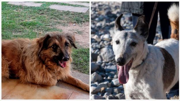 El tràngol de l'eutanàsia dels animals