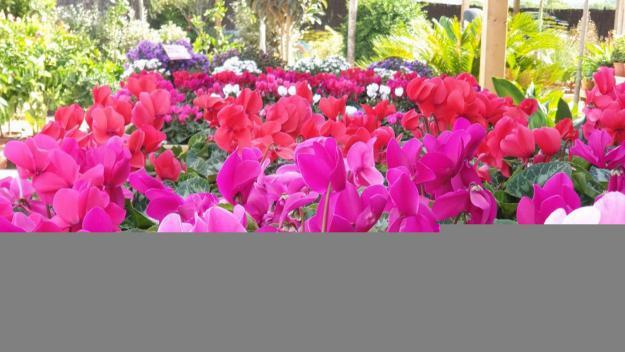 Les millors plantes per a la tardor i l'hivern / Foto: Cedida