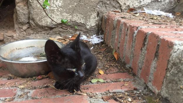 Els diners es destinaran a esterilització i atenció a gats malalts / Foto: El Cau Amic