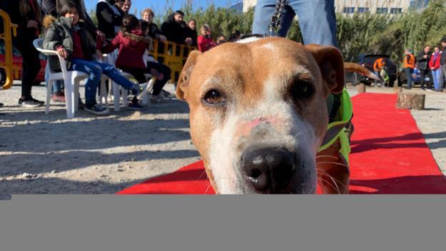 Els peluts d'El Cau Amic desfilen per trobar una família