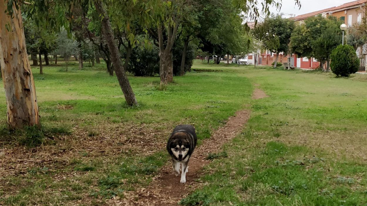 Passejar el gos és una de les poques activitats permeses / Foto: Cugat Mèdia
