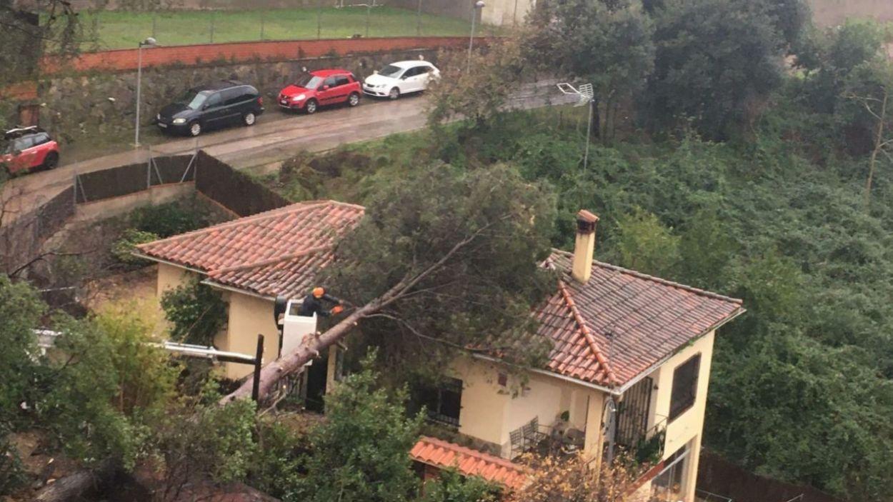 Els arbres de Sant Cugat han patit la borrasca / Foto: Cedida