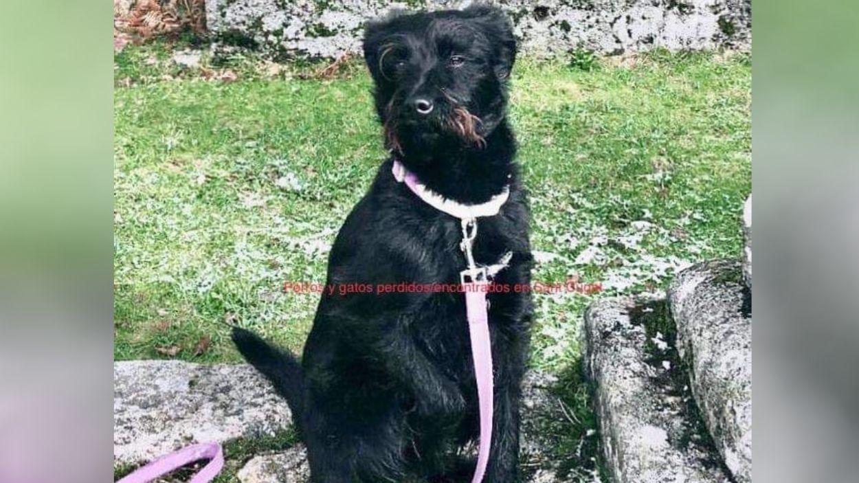 El Luffy / Foto: Perros y gatos perdidos/encontrados en Sant Cugat