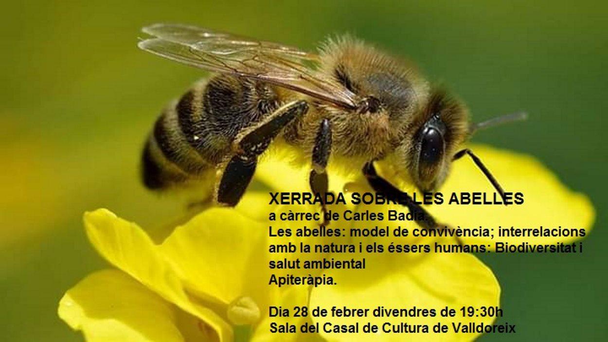 Xerrada sobre abelles i salut ambiental