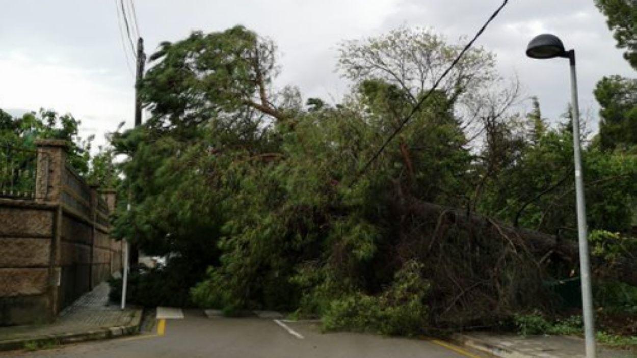Un arbre caigut a Valldoreix / Foto: EMD Valldoreix