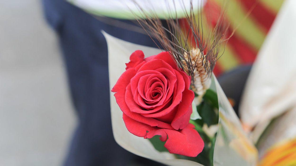 Les floristeries exhaureixen les roses / Foto: Localpres