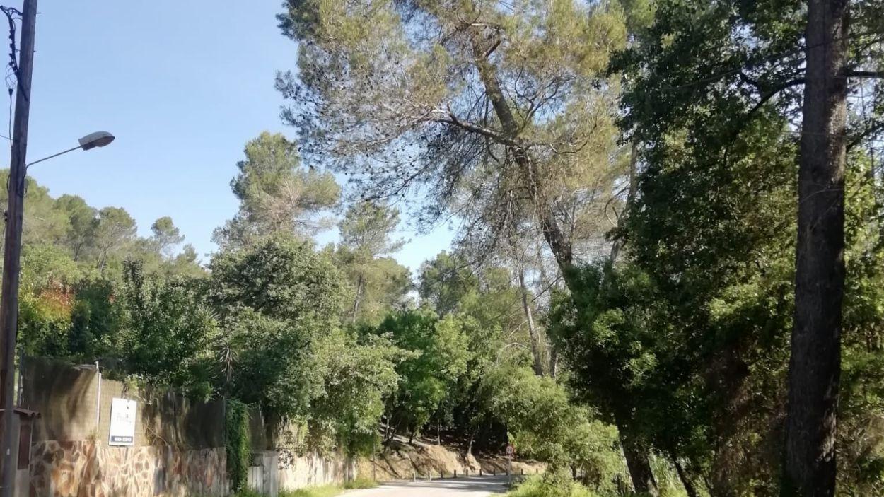 Es talaran 12 pins amb risc de caiguda / Foto: EMD Valldoreix