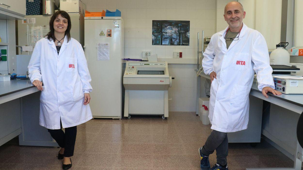 Vergara-Alert i Segalés (viròlegs): 'Que tinguis anticossos no vol dir que no et puguis contagiar o transmetre el coronavirus'