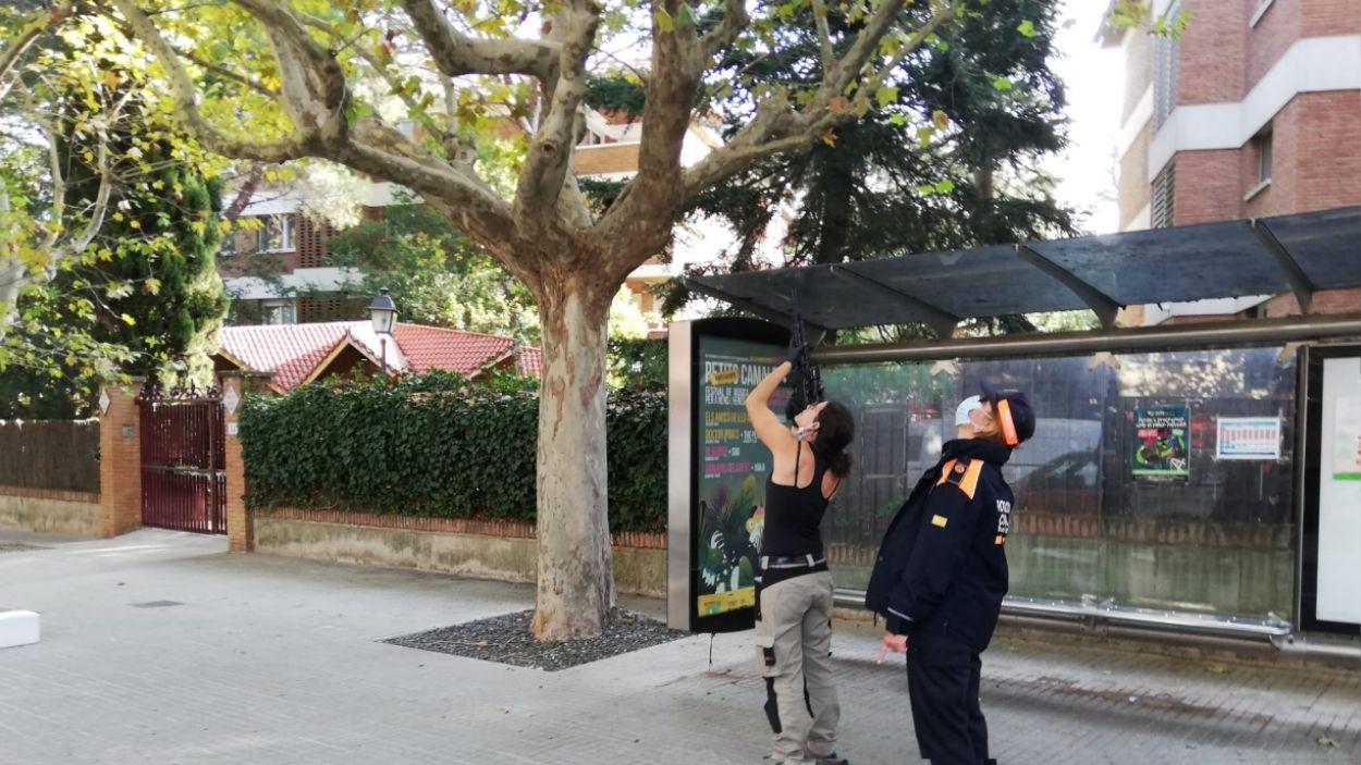 Una tècnica de l'empresa contractada, apuntant amb una escopeta el niu, acompayada d'una membre de Protecció Civil / Foto: Premsa Ajuntament