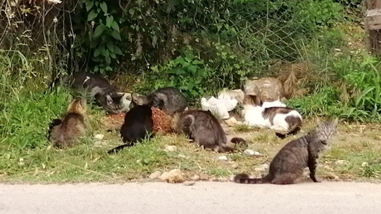 Imatge d'arxiu d'una colònia de gats / Foto: Cau Amic