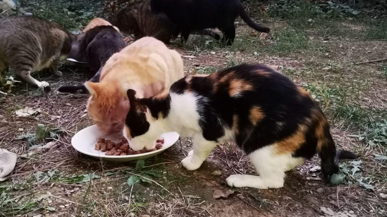 Colònia de gats a Sant Cugat del Vallès/Foto:Cau Amic.