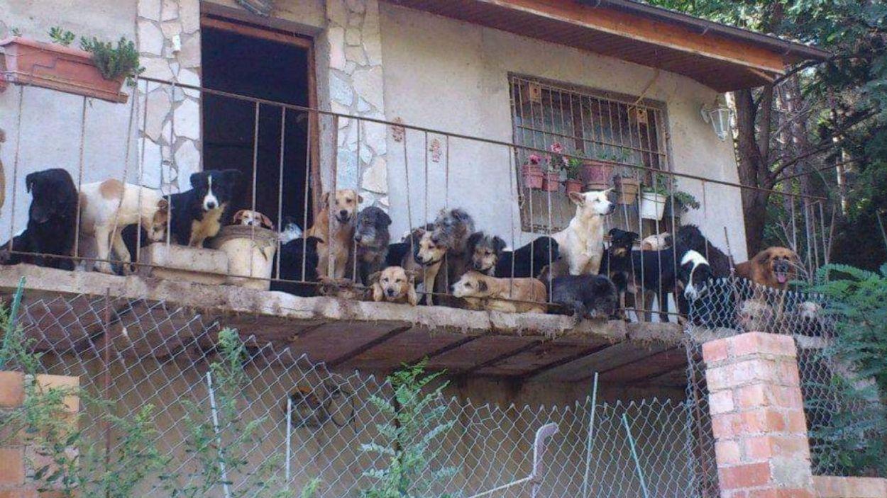 Gossos a casa d'una família que patia la síndrome de Noè/ Foto: Cau Amic