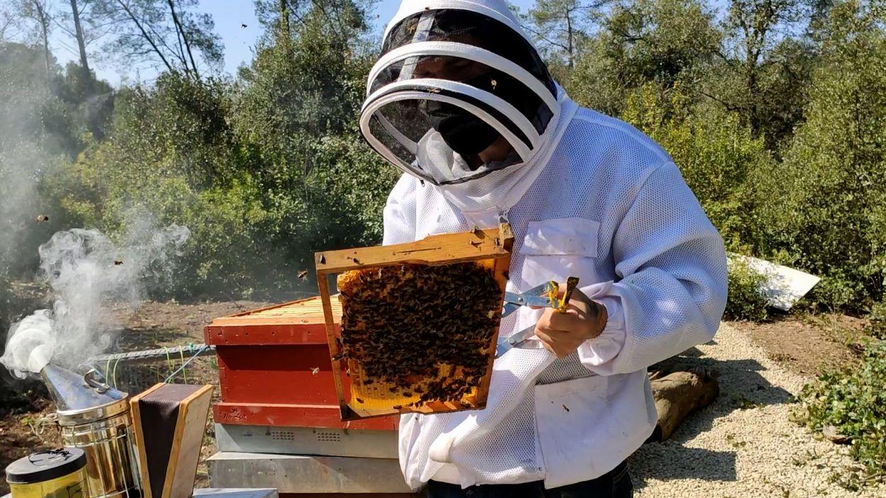 Èric Barbero en un apiari didàctic a Collserola / Foto: Cugat Mèdia