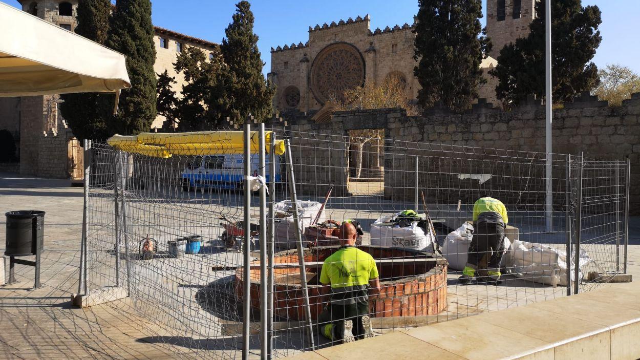 Treballs per plantar la nova alzina / Foto: Ajuntament de Sant Cugat