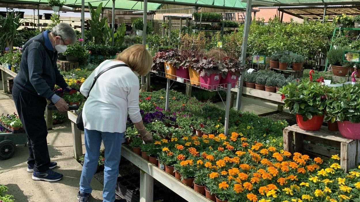 Les cinc millors plantes per a aquesta primavera