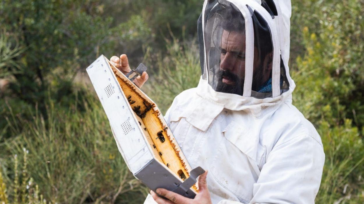 """Èric Barbero, abellaire: """"Vaig canviar la fisioteràpia pel món de les abelles; va ser amor a primera vista"""""""