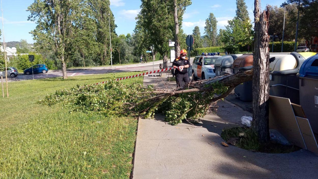 La ventada d'aquest dimecres fa caure branques d'arbres a diferents punts de Sant Cugat