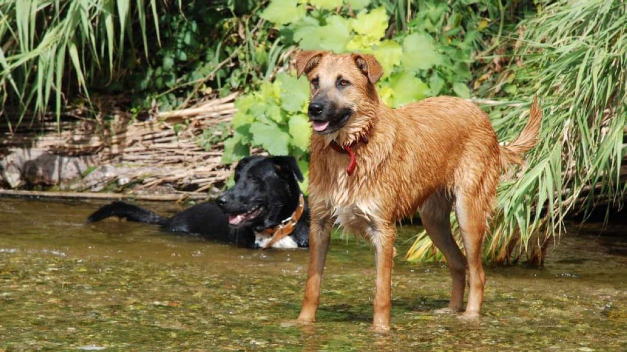 Imatge d'arxiu d'un parell de gossos / Foto: Cau Amic