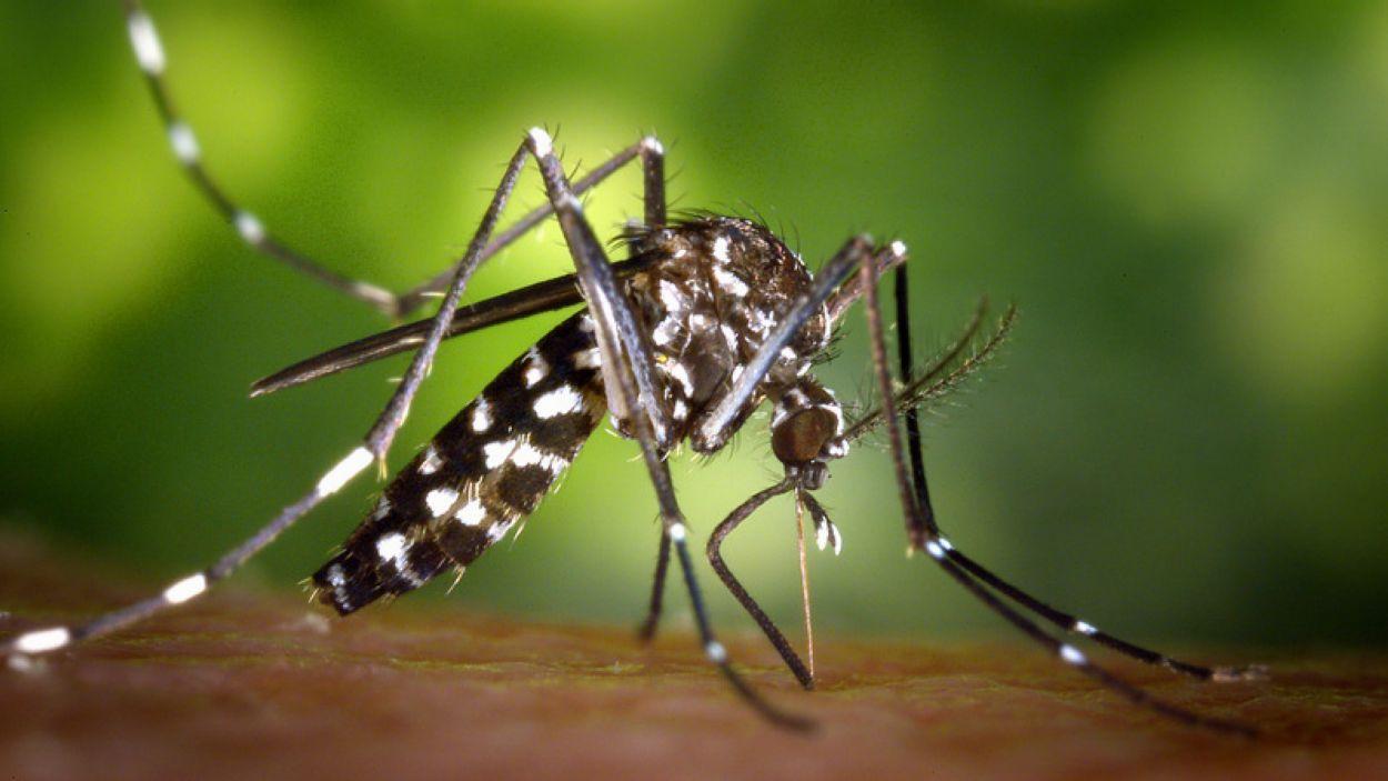 El canvi climàtic provocarà un augment de la població de mosquits?
