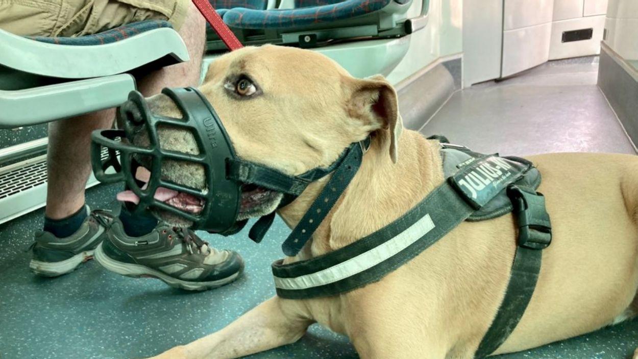 Els gossos han d'anar lligats i amb el morrió / Foto: Cugat Mèdia