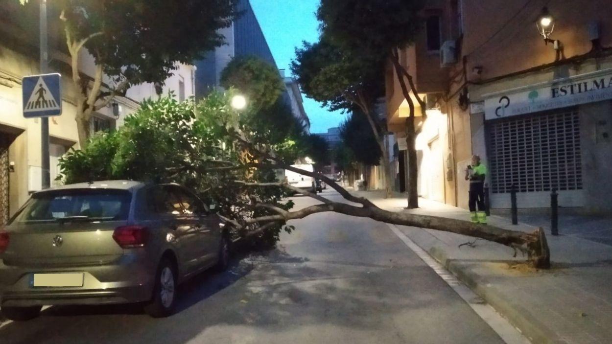 L'arbre caigut a l'avinguda Anselm Clavé / Foto: Cedida