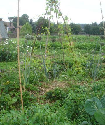 Sant Cugat porta l'experiència dels horts escolars a un Congrés sobre Educació i Sobirania Alimentària