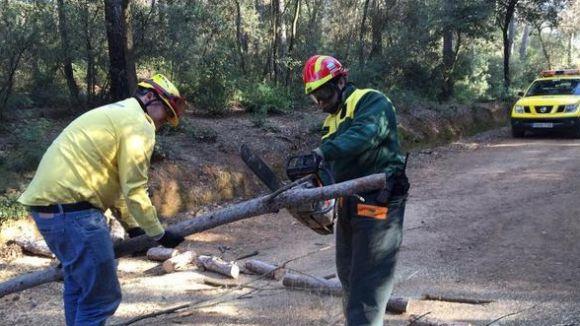 L'ADF retira un arbre caigut que tallava una via a Torre Cendrera