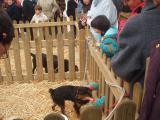 La plaça d'Octavià tindrà aquest cap de setmana en un tancat on adoptar gats i gossos