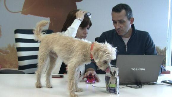 Els treballadors d'Affinity poden anar amb la mascota a l'oficina