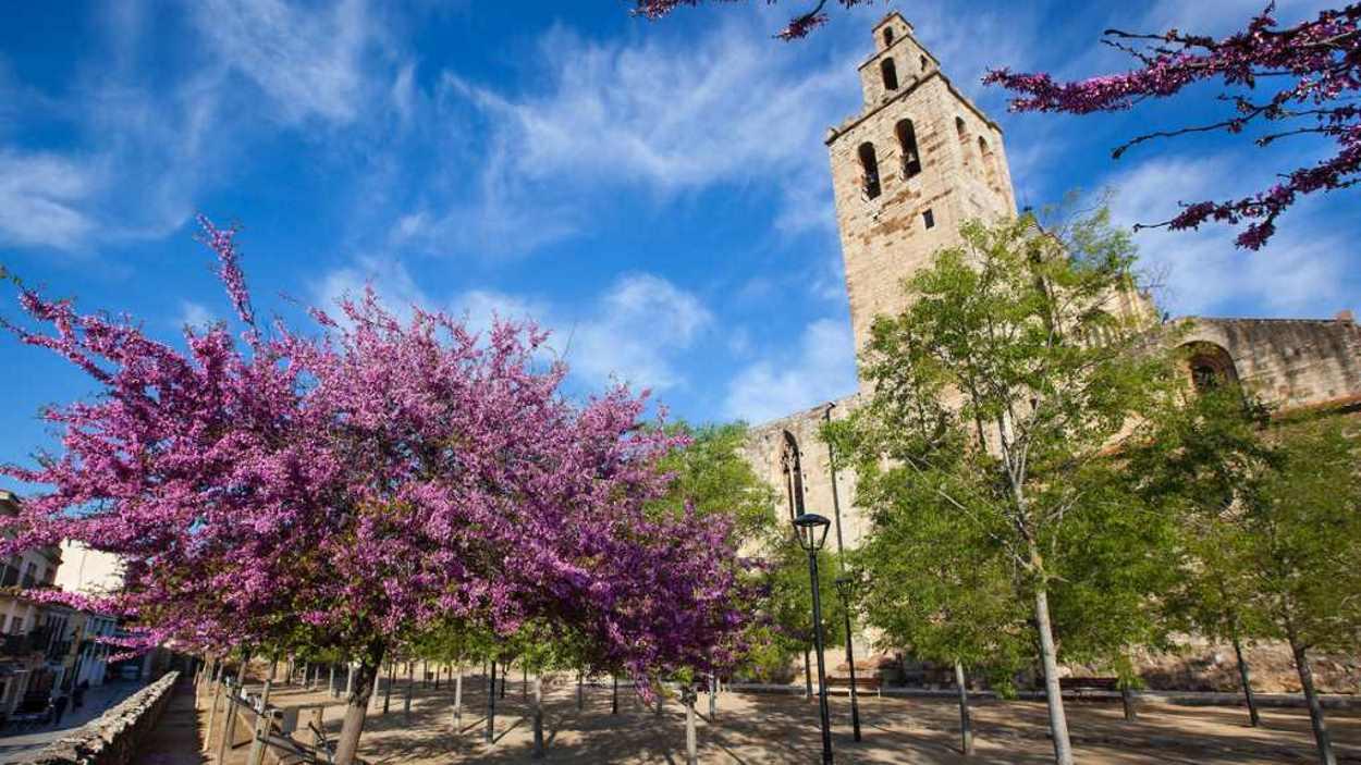 Ruta guiada: 'Els jardins del Monestir i el parc de l'Arborètum-passeig Antoni Gaudí'