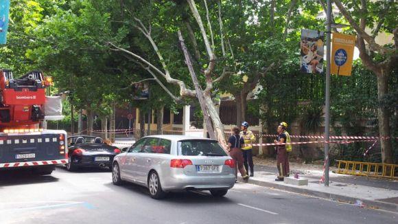 Els Bombers retiren un arbre de la rambla de Ribatallada pel xoc d'un camió