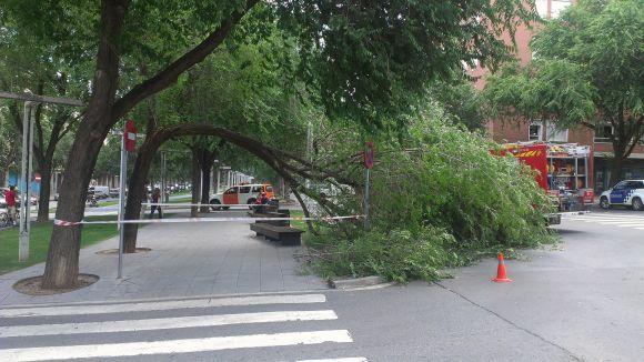 Cau un arbre a la rambla del Celler sense provocar ferits ni desperfectes
