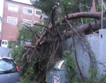 Arbres caiguts, talls de trànsit i acumulacions d'aigua, efectes de la pluja a la ciutat
