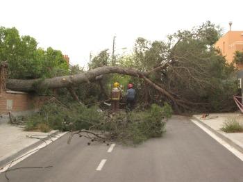 Cau un arbre al carrer Saragossa de Mira-sol