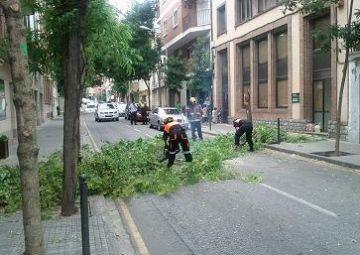Talen un arbre en perill de caure de l'avinguda de Francesc Moragas