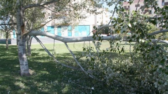 El vent deixa alguns arbres caiguts i poques incidències