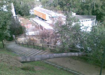 Els florestans afectats per la ventada poden recórrer avui al servei jurídic de l'Ajuntament