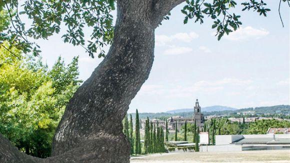 Sant Cugat referma la intenció de catalogar i protegir els arbres monumentals