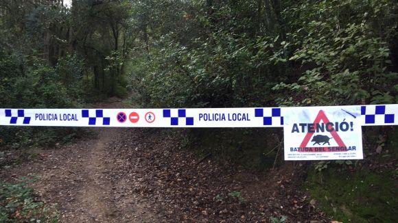 Nova batuda de senglars a Collserola per reduir-ne la presència al Parc Natural