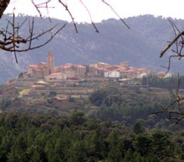 Localitzen dalt d'un arbre la santcugatenca desapareguda a Castelló