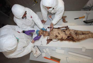 Les restes funeràries de Blanca d'Anjou demostren que va morir en un part