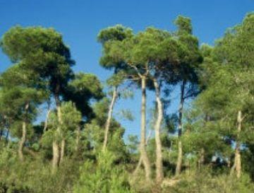 Queda prohibit fer foc a menys de 500 metres de zona forestal