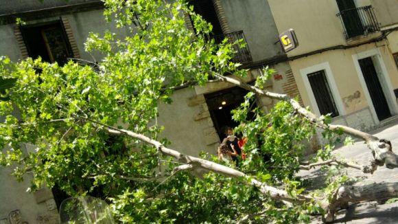 Cau una branca a la plaça de Barcelona sense causar ferits