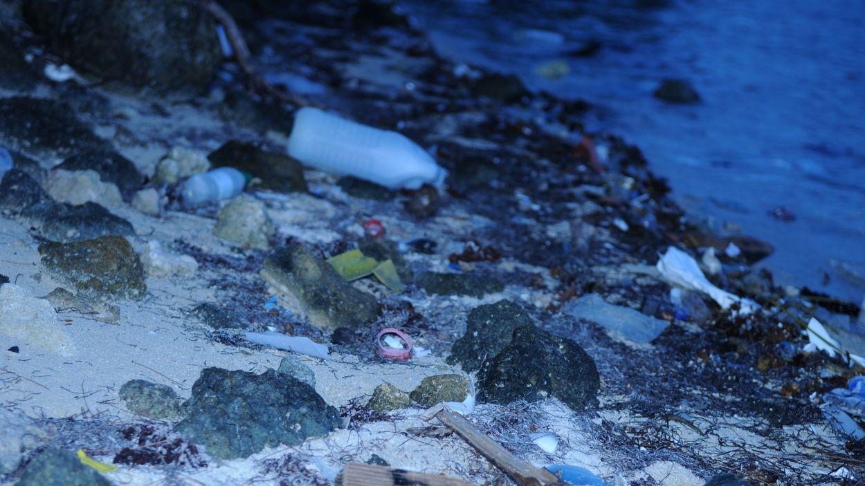 Bossa al fons marí / Foto: Santiago Palacios