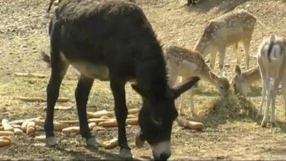 El nucli zoològic de Cal Castillo cessa l'activitat per manca de seguretat
