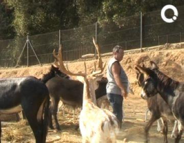 El Centre d'Acollida d'Animals de Barcelona lliurava exemplars a Cal Castillo, malgrat ser un zoo il·legal