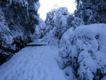 Els camins de la serra de Collserola tornen a estar plens de restes de la nevada